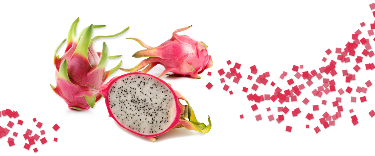 Dragon Fruit Plant Commercial Supplier DFSA